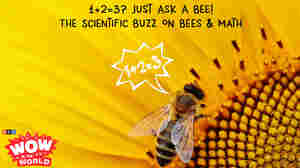 1+2=3? Just Ask A BEE! - The Scientific Buzz On Bees & Math (encore)