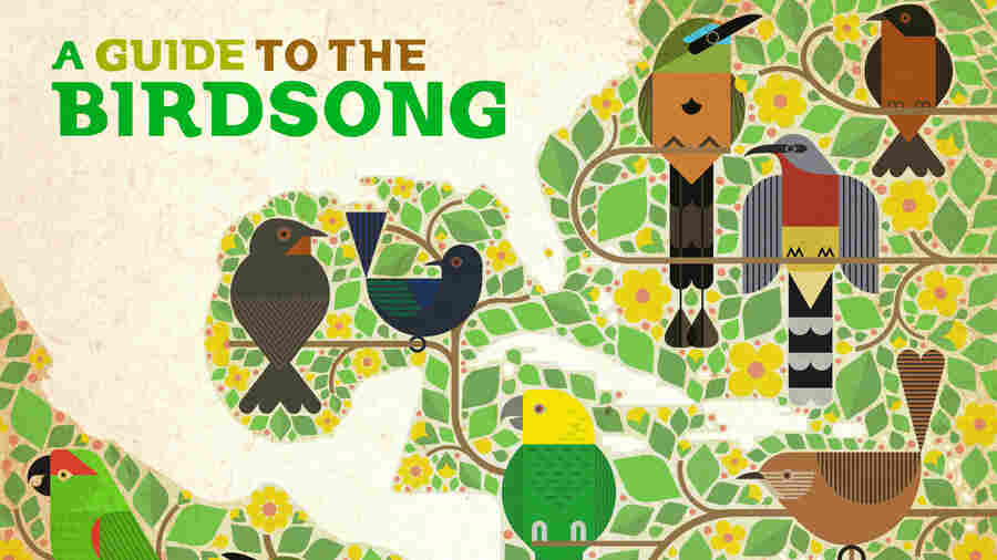 A New Album Turns The Sound Of Endangered Birds Into Electronic Music