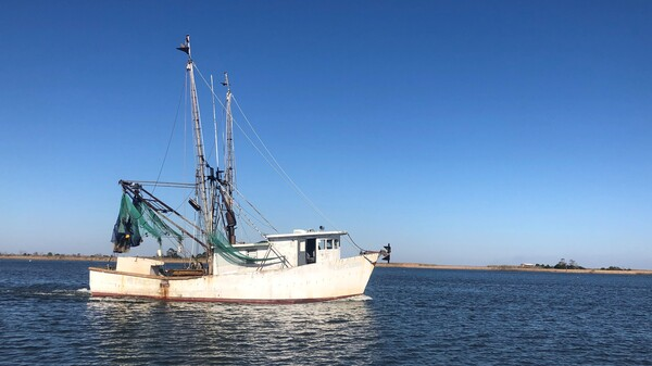 A fishing vessel plying the waters of Apalachicola Bay.