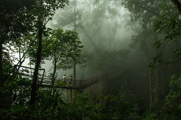 Two villagers cross the longest-known living-root bridge on a misty morning. The bridge is over 160 feet long and hangs over a 230-foot-deep river valley.