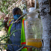 Scientists In Washington State Have Trapped Their 1st Murder Hornet