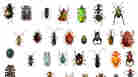 Beetles And Wasps Vie For Title of Most Diverse Critter