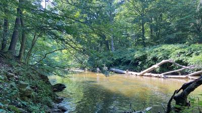 Can You Swim In Rock Creek? Washingtonians Aren't Waiting For An Answer