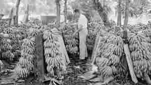 Reframing History: Bananas