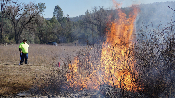 Ron Goode looks on as sourberry bushes burn. After the bushes are burned in the winter, they re-sprout in the spring.