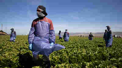 Without Federal Protections, Farm Workers Risk Coronavirus Infection To Harvest Crops