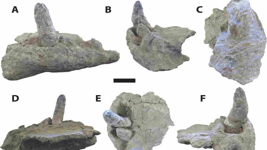 'Teeth The Size Of Bananas'; New Study Paints Picture Of 'Terror Crocodiles'