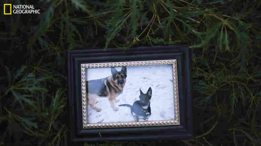 1st U.S. Dog With COVID-19 Has Died, And There's A Lot We Still Don't Know