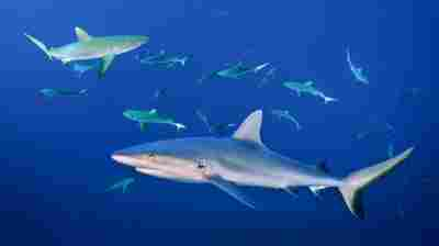 Everyone Needs A Buddy. Even Sharks