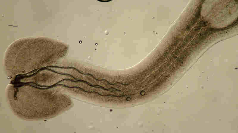 Save The Parasites