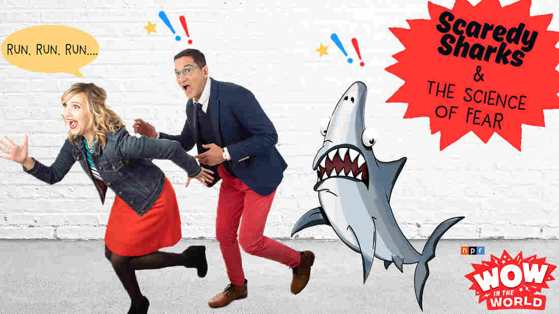 Heights? Darkness? Orcas? Turns out, everyone's afraid of something! Even the Great White Shark, the most fearsome predator in the seven seas! But afraid of what? And why? And how can this fear impact the rest of the ocean? Join Guy and Mindy as they head off to the season premiere of the Bruni Soto show to explore the Who, What, Where, Why, How and Wow in the World of fears!