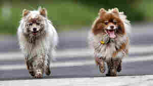 Germany's Proposed Dog Walking Law Stirs Consternation Among Pet Owners
