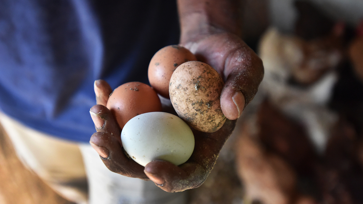 chicken egg duo wide f7868fa54ed9ef60a8816a92d5bb619f99c996af jpg?s=1400.