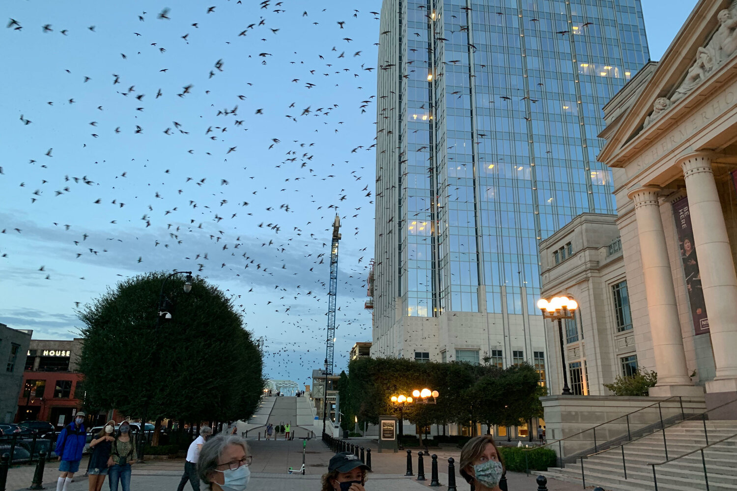 People have flocked to downtown Nashville, Tenn. the past few days to take in a rare sight: thousands of Purple Martins. The migratory birds, on their way south for the winter, rarely roost in urban areas. Blake Farmer/WPLN