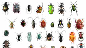 This Is Not A Typo: One In Four Animals Known To Science Is A Beetle