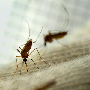 Micro Wave: Why Mosquitoes Bite You More Than Your Friends