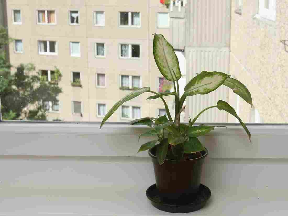A potted plant stands on the window sill of a guestroom looking out onto a communist East Germany-era prefab apartment building.