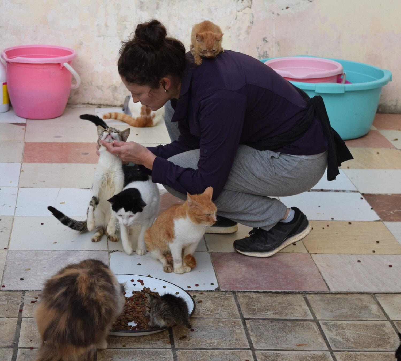 Volunteer Kaitlyn Schultz spends her Saturdays tending to some 50 cats on this Rabat rooftop. Rebecca Rosman/Rebecca Rosman