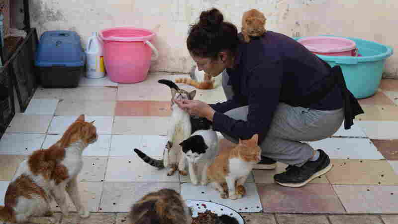 When You Spot A Stray, Who You Gonna Call? In Rabat, ADAN Is Likely The Answer