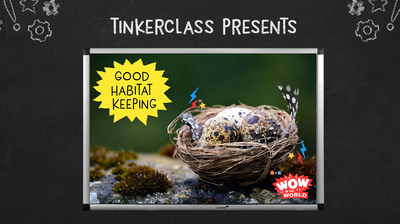 Tinkerclass (Week 3 Day 5): Reflect & Share