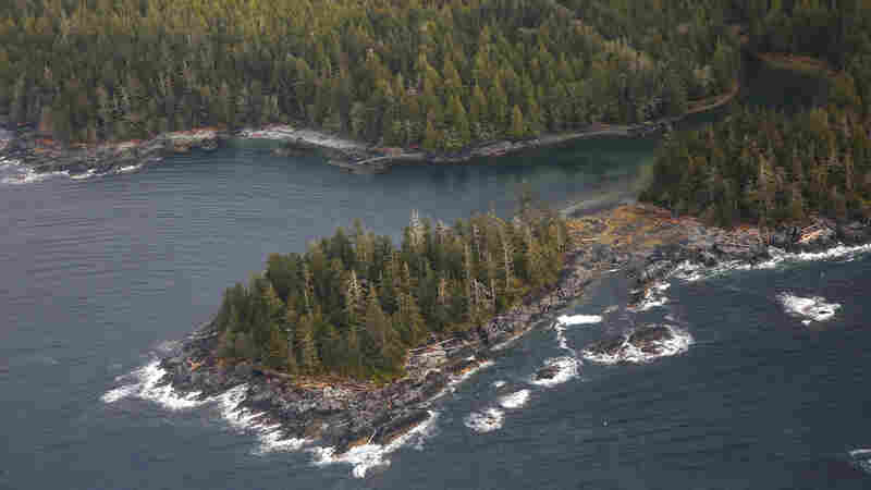 Trump Administration Moves To Expand Development In Alaska's Tongass National Forest