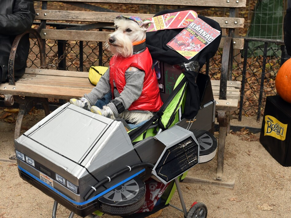 A dog dressed as Marty McFly from <em>Back to the Future</em> attends the Tompkins Square Halloween Dog Parade in 2015. New research says time travel might be possible without the problems McFly encountered. (Timothy A. Clary/AFP via Getty Images)