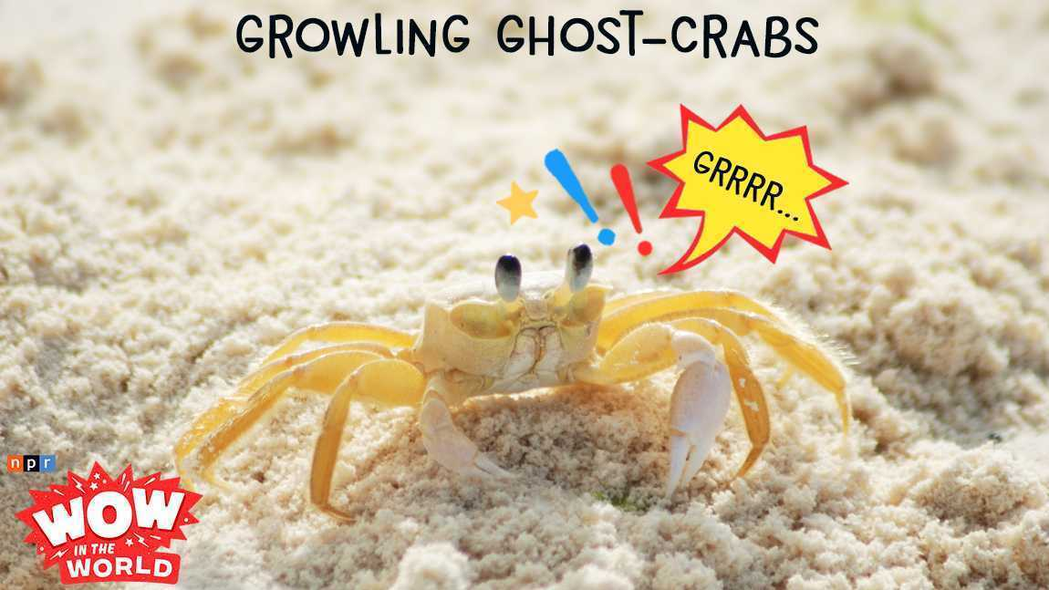 Growling Ghost-Crabs (encore)