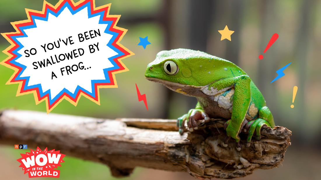 When Mindy awakes the whole neighborhood for some morning mindfulness, Guy Raz and the gang find themselves stuck in a stomach-churning guided meditation that offers only one way out...of a FROG. It's the Who, What, When, Where, Why, How and Wow in the World of how to be eaten by a frog and live to tell the tale!