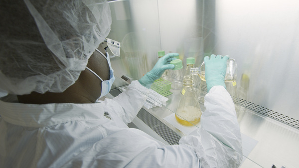 In this May 2020 file photo provided by Eli Lilly, a researcher tests possible COVID-19 antibodies in a laboratory in Indianapolis. On Monday, U.S. government officials announced they are putting an early end to a study testing an Eli Lilly antibody drug for people hospitalized with COVID-19 because it doesn