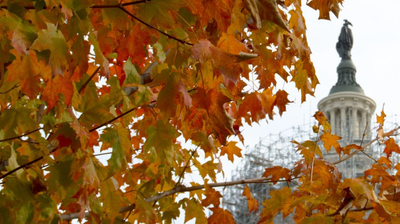 D.C. Issues COVID-19 Guidance For Thanksgiving Activities And Travel