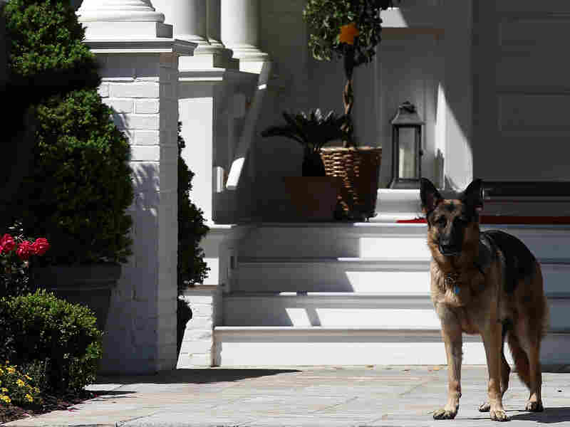 Major And Champ Are Major Champs In This Election: Dogs Return To The White House
