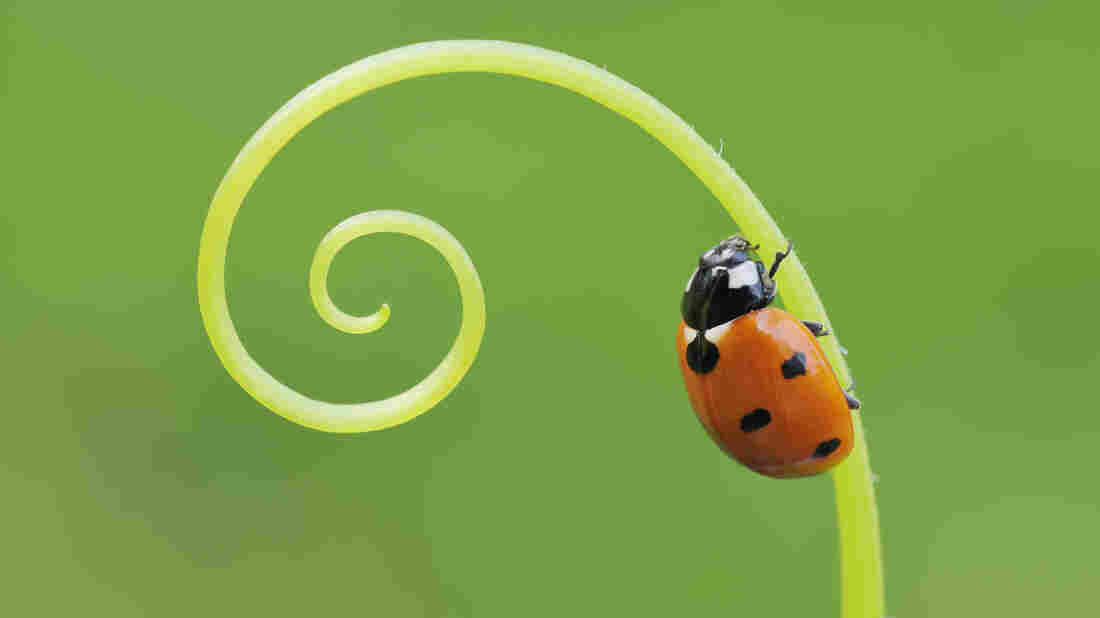 Lady bug on a stem