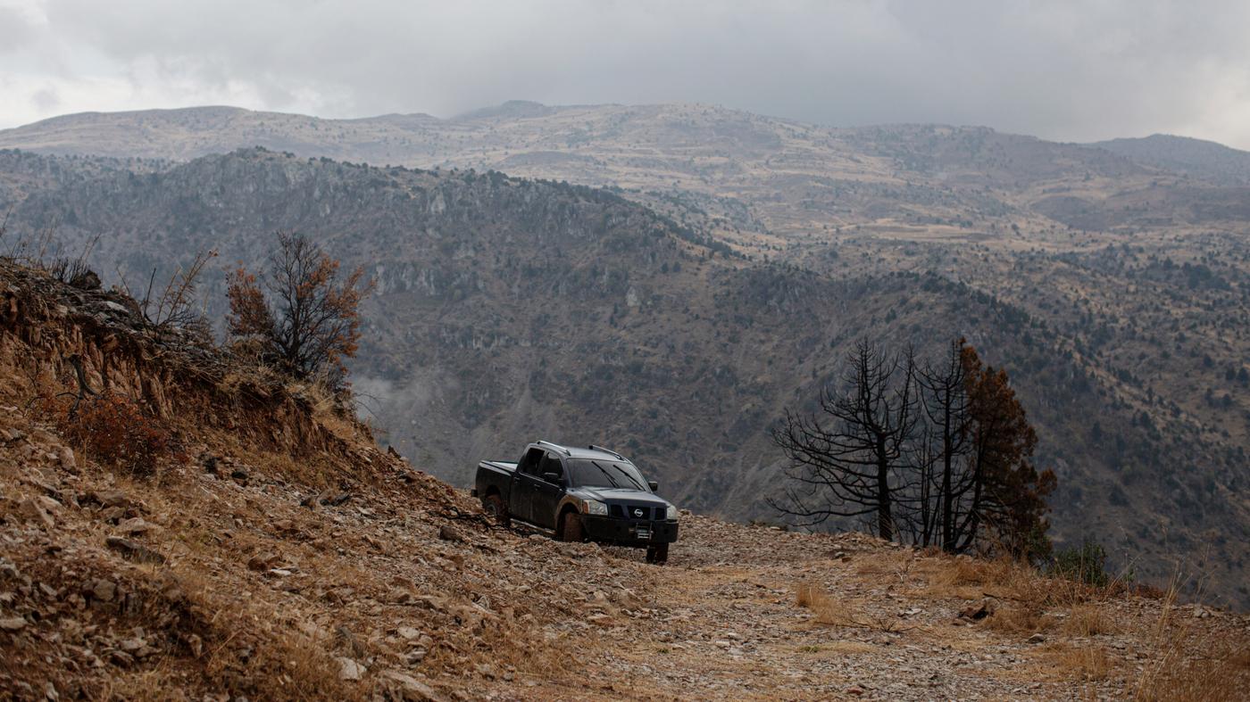 Climate Change Threatens Lebanon's Storied Ancient Cedars - NPR