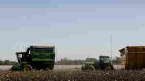 Too Much Of A Good Thing: The Cautionary Tale of Biotech Crops