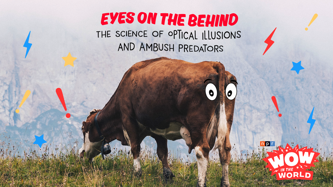 Just when you thought the world of wow couldn't get any weirder, Mindy and Dennis are painting eyes on cows' butts...for science! But WHY? Join Guy Raz, Mindy, and the gang as they uncover the Who, What, When, Where, Why, How, and Wow in the World of optical illusions and ambush predators!