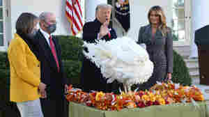 Trump Pardons Corn The Turkey, Trying To Show Normalcy Amid The Abnormal