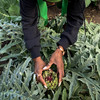 A Garden Is The Frontline In The Fight Against Racial Inequality And Disease