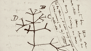Missing Ink: Darwin Notebooks, Long Unseen, Now Believed Stolen
