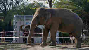 'World's Loneliest Elephant' Moving To Sanctuary, With Help From Cher