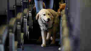 Grounded: Emotional Support Animals No Longer Guaranteed Free Flights
