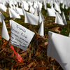 How Do We Grieve 300,000 Lives Lost?