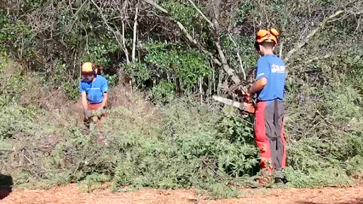 Hawaii Reboots Depression-Era Conservation Corps Using Pandemic Assistance Funds