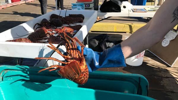 Fishermen sell freshly caught seafood at the Saturday Fishermen