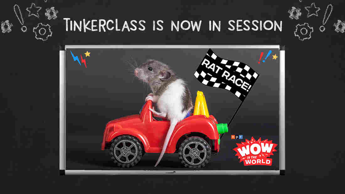 It's day 3 of TINKERCLASS--the create and test phase. Using your plan from yesterday, it's time to bring your idea to life!  This week's project features the Wow in the World episode, Rat Race!