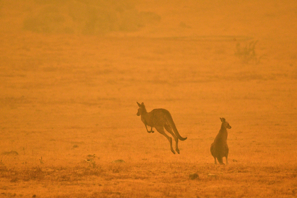 A kangaroo jumps in a field amid smoke from a bush fire in Snowy Valley on the outskirts of Cooma, Australia, on Jan. 4. Up to 3,000 military reservists were called up to tackle Australia's bush fire crisis as tens of thousands of residents fled their homes.