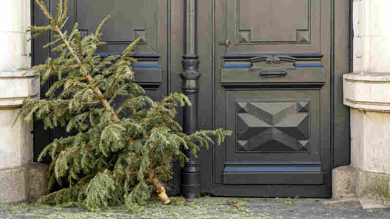Conifer Cuisine: Don't Toss Your Christmas Tree Yet! Here's How You Can Cook With It