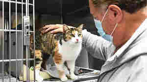 The Cat Who Came Back: Patches, Believed Killed In Mudslide, Shows Up 3 Years Later