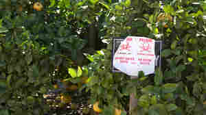 Toxic Pesticide Faces New Scrutiny From Biden Administration