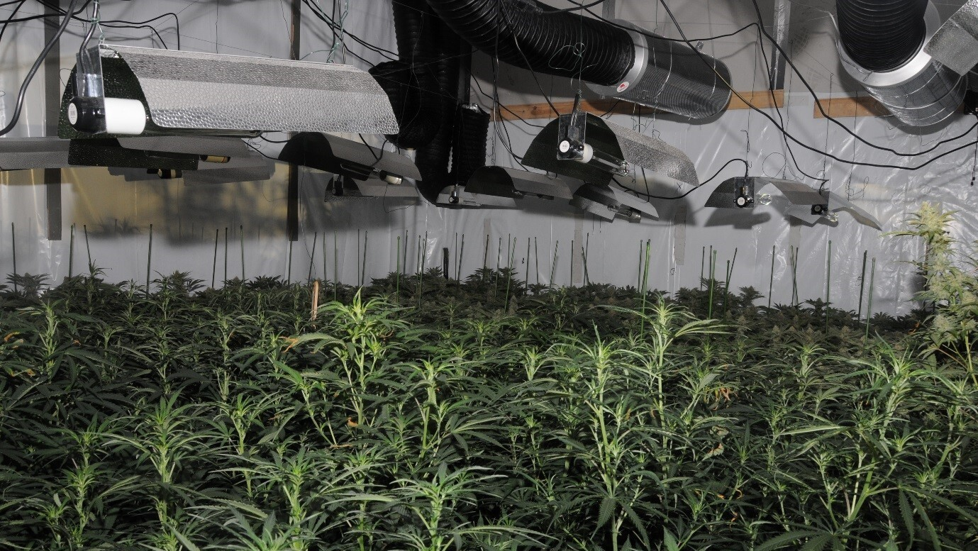 Police Find 1st 'Cannabis Factory' In London's Financial District Destroy 826 Plants – NPR