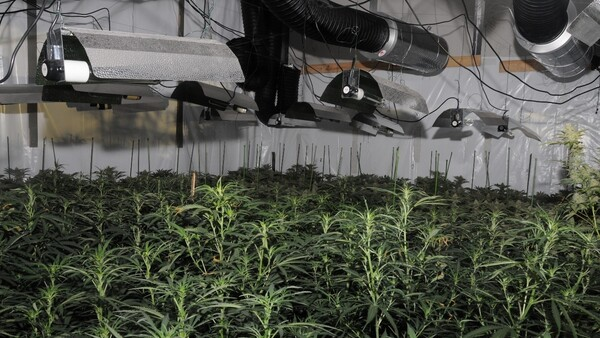 "Photo released by the City of London Police showing the first ""cannabis factory"" discovered in the City."